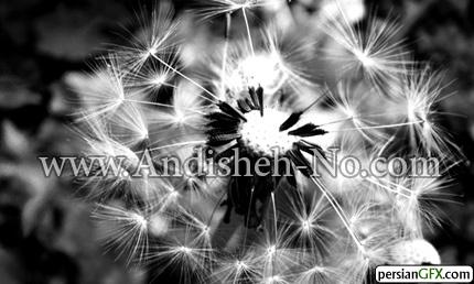 13New%20photos%20black%20and%20white - عکس سیاه سفید چیست
