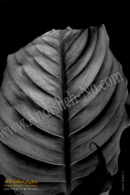 How black and white photography