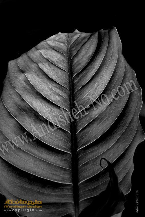 5Old%20black%20and%20white%20photography - تفاوت عکس سیاه و سفید و رنگی