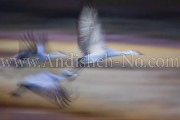 7Up%20photo%20of%20a%20bird%20on%20the%20move - چگونه حرکت را در عکسهایمان به تصویر بکشیم