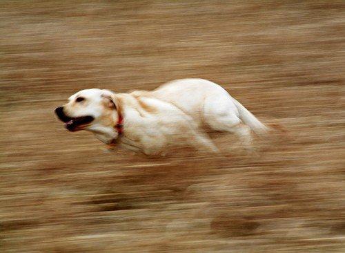blurred 2 - چگونه حرکت را در عکسهایمان به تصویر بکشیم