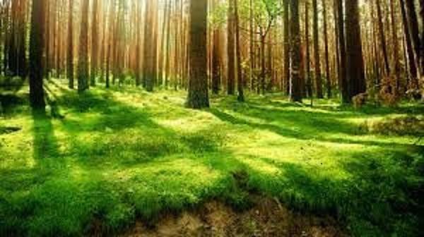 images - دلیل اهمیت نور خورشید و نور طبیعی در عکاسی و فیلمبرداری